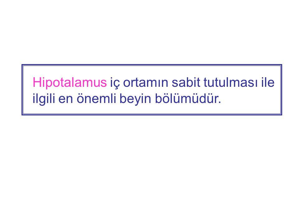 Hipotalamus, limbik sistemin ortasında yerleşik küçük bir yapı olup limbik sistemde anahtar rolündedir ve limbik sistemle tüm düzeylerde iki yönlü iletişime sahiptir.