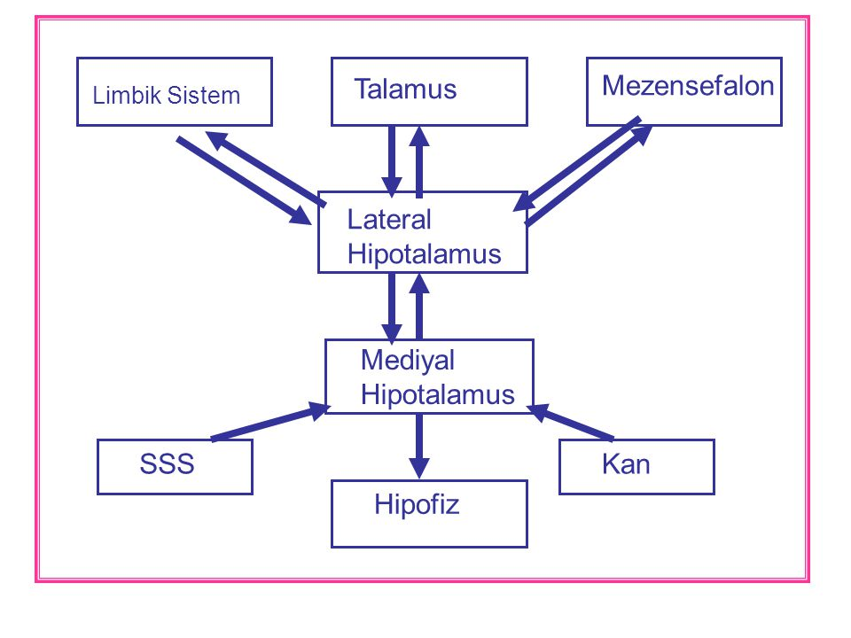 Talamus Mezensefalon Limbik Sistem Lateral Hipotalamus Mediyal Hipotalamus Kan Hipofiz SSS