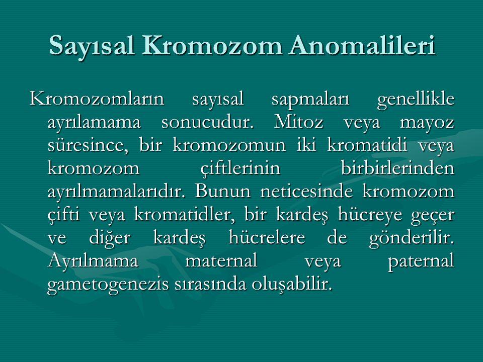Sayısal Kromozom Anomalileri Kromozomların sayısal sapmaları genellikle ayrılamama sonucudur. Mitoz veya mayoz süresince, bir kromozomun iki kromatidi