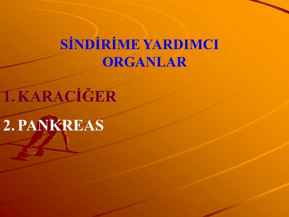 SİNDİRİME YARDIMCI ORGANLAR 1.KARACİĞER 2.PANKREAS