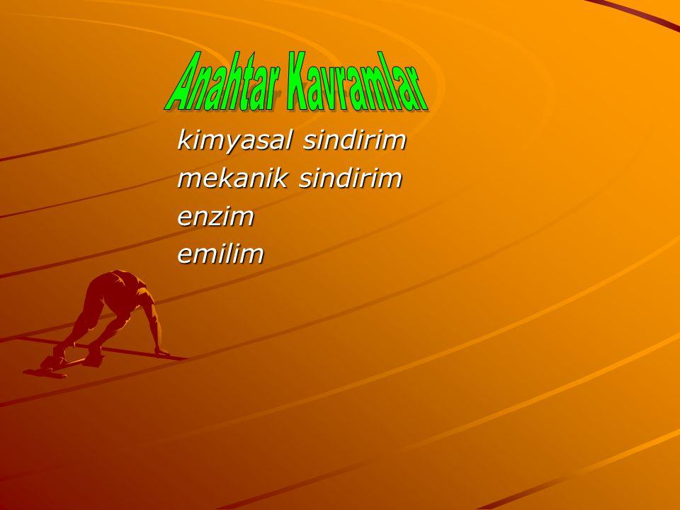 kimyasal sindirim mekanik sindirim enzimemilim