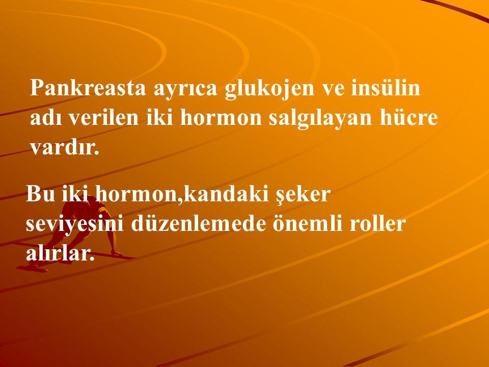 Pankreasta ayrıca glukojen ve insülin adı verilen iki hormon salgılayan hücre vardır. Bu iki hormon,kandaki şeker seviyesini düzenlemede önemli roller