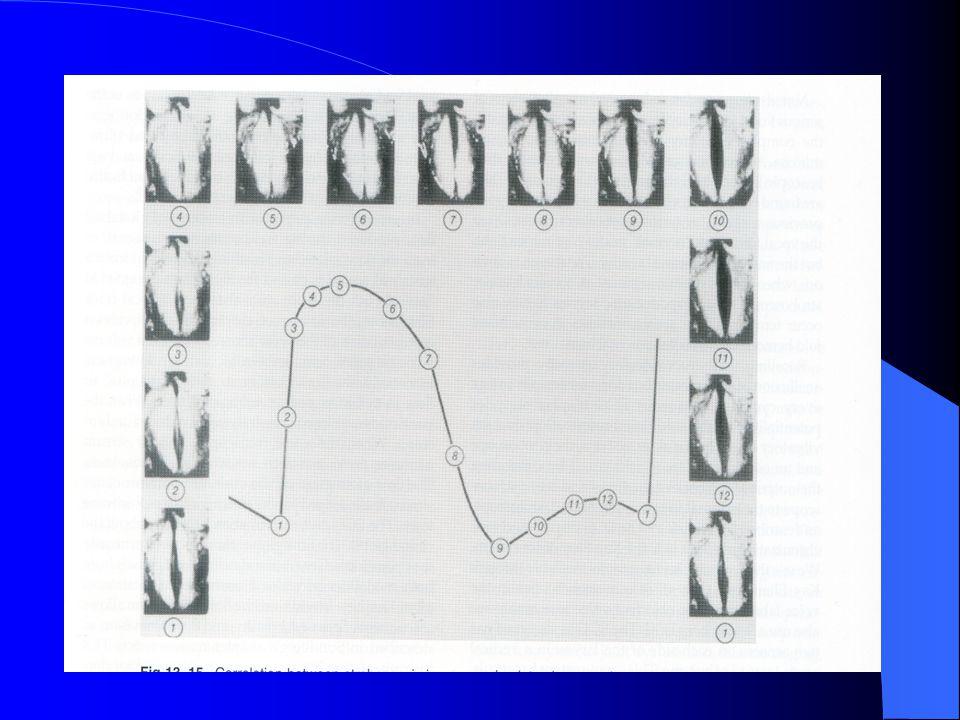 AERODİNAMİK DEĞERLENDİRME Geleneksel 'pulmuoner fonksiyon testi' respirasyon fonksiyonunun ölçümünü sağlar.