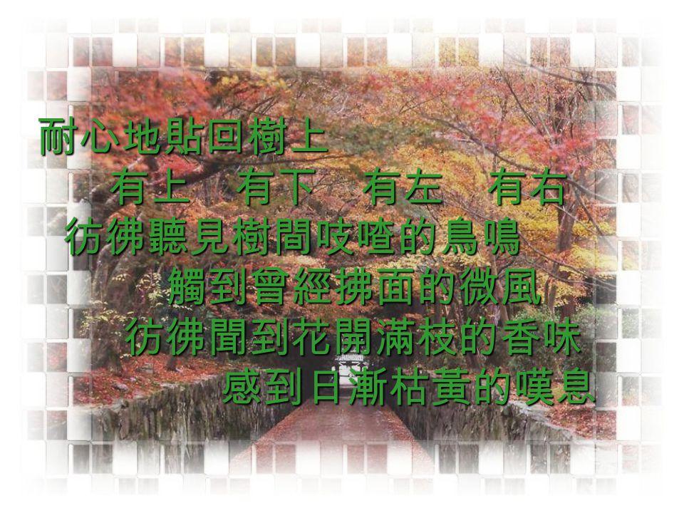 耐心地貼回樹上 有上 有下 有左 有右 彷彿聽見樹間吱喳的鳥鳴 耐心地貼回樹上 有上 有下 有左 有右 彷彿聽見樹間吱喳的鳥鳴 觸到曾經拂面的微風 彷彿聞到花開滿枝的香味 觸到曾經拂面的微風 彷彿聞到花開滿枝的香味 感到日漸枯黃的嘆息 感到日漸枯黃的嘆息
