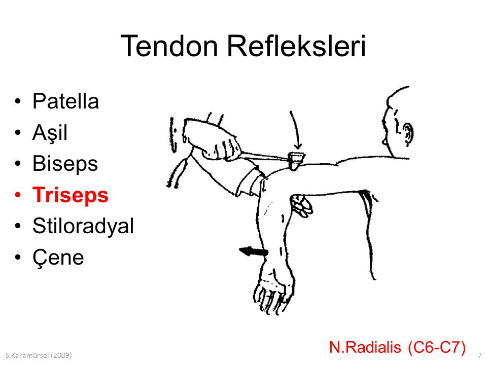 S.Karamürsel (2009)7 Tendon Refleksleri Patella Aşil Biseps Triseps Stiloradyal Çene N.Radialis (C6-C7)