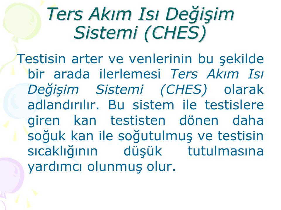 Ters Akım Isı Değişim Sistemi (CHES) Testisin arter ve venlerinin bu şekilde bir arada ilerlemesi Ters Akım Isı Değişim Sistemi (CHES) olarak adlandır