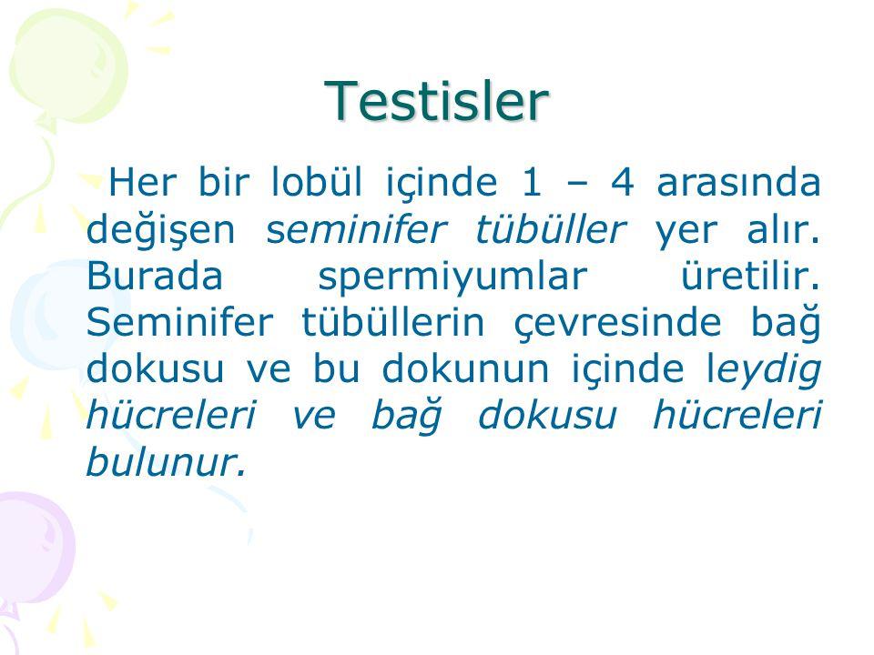 Testisler Her bir lobül içinde 1 – 4 arasında değişen seminifer tübüller yer alır. Burada spermiyumlar üretilir. Seminifer tübüllerin çevresinde bağ d