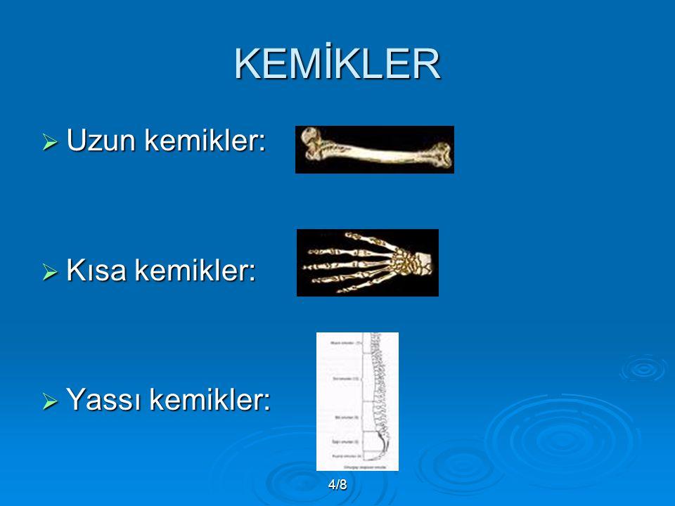 4/8 KEMİKLER  Uzun kemikler:  Kısa kemikler:  Yassı kemikler: