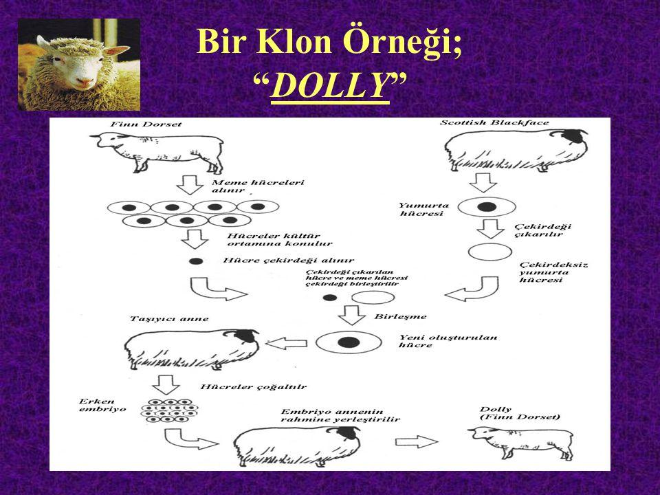 Bir Klon Örneği; DOLLY