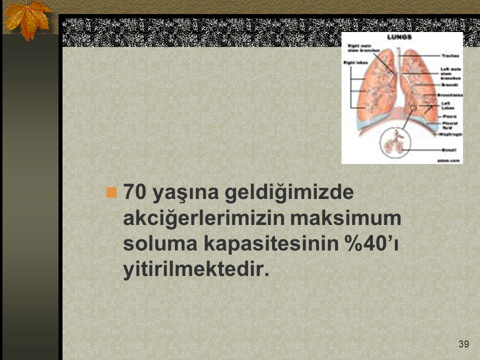 39 70 yaşına geldiğimizde akciğerlerimizin maksimum soluma kapasitesinin %40'ı yitirilmektedir.