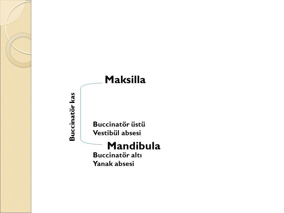 Buccinatör üstü Vestibül absesi Buccinatör altı Yanak absesi Buccinatör kas Maksilla Mandibula