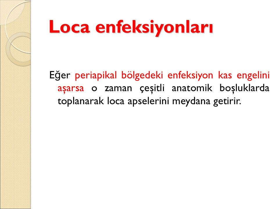 Loca enfeksiyonları E ğ er periapikal bölgedeki enfeksiyon kas engelini aşarsa o zaman çeşitli anatomik boşluklarda toplanarak loca apselerini meydana getirir.