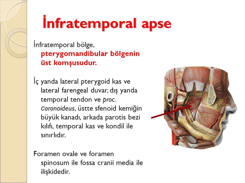 İ nfratemporal apse İ nfratemporal bölge, pterygomandibular bölgenin üst komşusudur. İ ç yanda lateral pterygoid kas ve lateral farengeal duvar, dış y