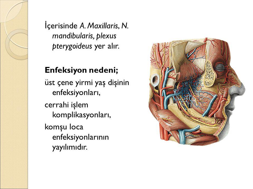İ çerisinde A. Maxillaris, N. mandibularis, plexus pterygoideus yer alır. Enfeksiyon nedeni; üst çene yirmi yaş dişinin enfeksiyonları, cerrahi işlem