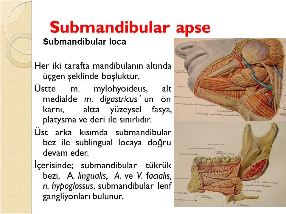 Submandibular apse Submandibular loca Her iki tarafta mandibulanın altında üçgen şeklinde boşluktur.