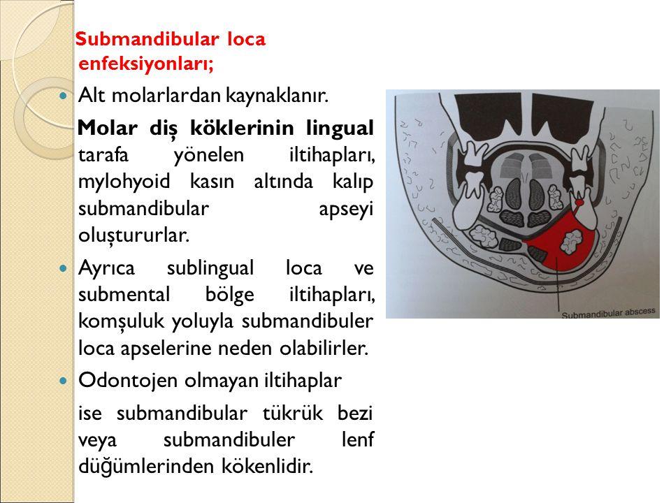 Submandibular loca enfeksiyonları; Alt molarlardan kaynaklanır.