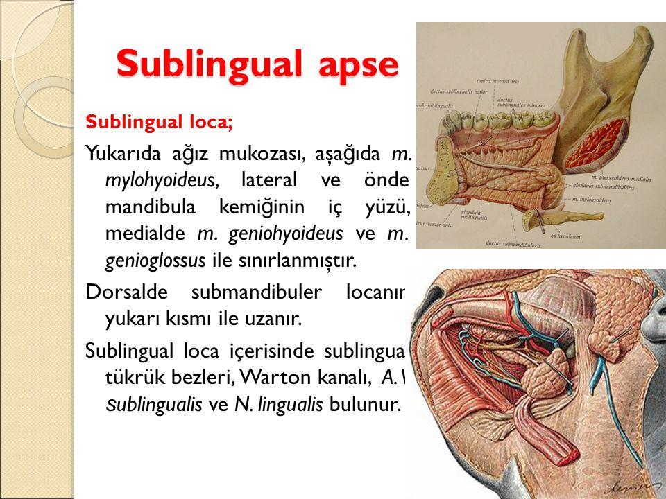 Sublingual apse Sublingual loca; Yukarıda a ğ ız mukozası, aşa ğ ıda m. mylohyoideus, lateral ve önde mandibula kemi ğ inin iç yüzü, medialde m. genio