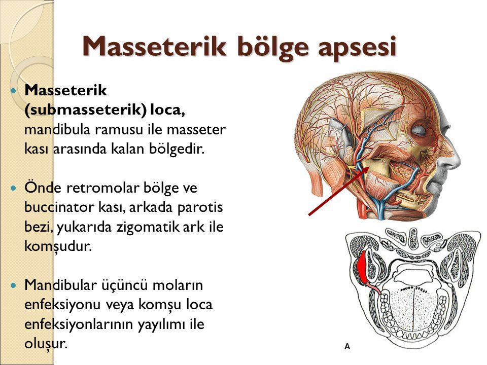 Masseterik bölge apsesi Masseterik (submasseterik) loca, mandibula ramusu ile masseter kası arasında kalan bölgedir.
