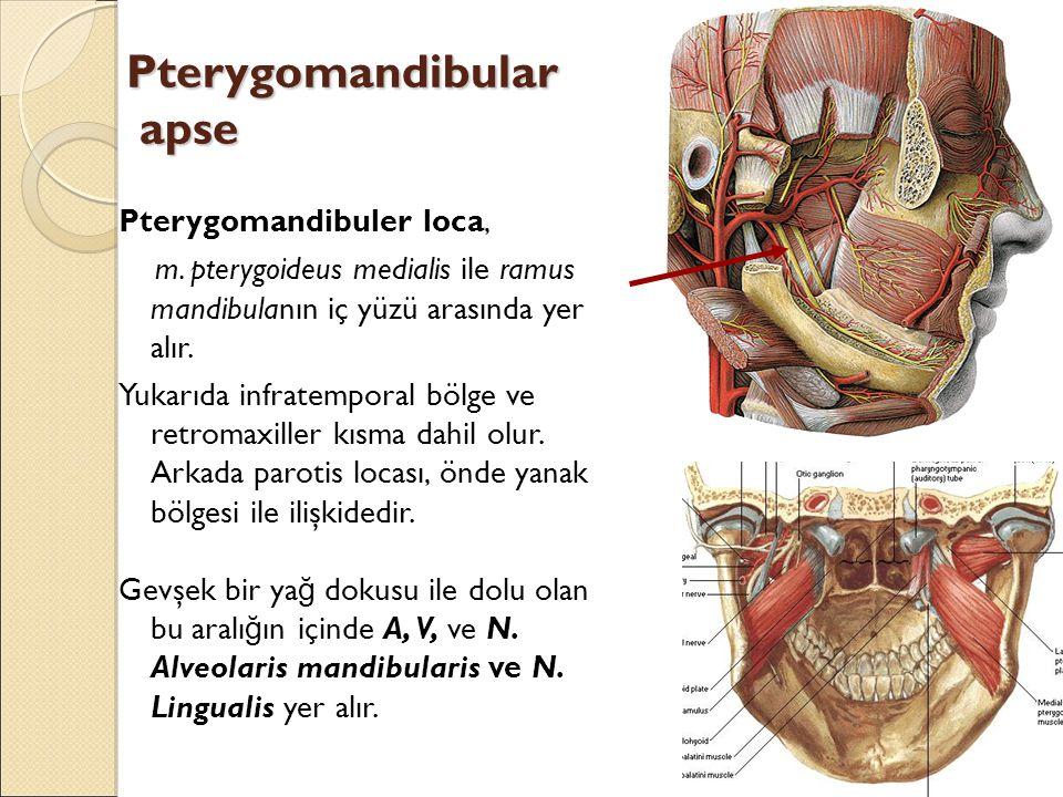 Pterygomandibular apse Pterygomandibuler loca, m.