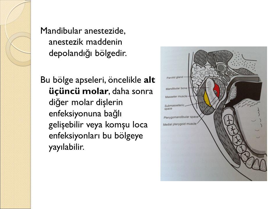 Mandibular anestezide, anestezik maddenin depolandı ğ ı bölgedir. Bu bölge apseleri, öncelikle alt üçüncü molar, daha sonra di ğ er molar dişlerin enf
