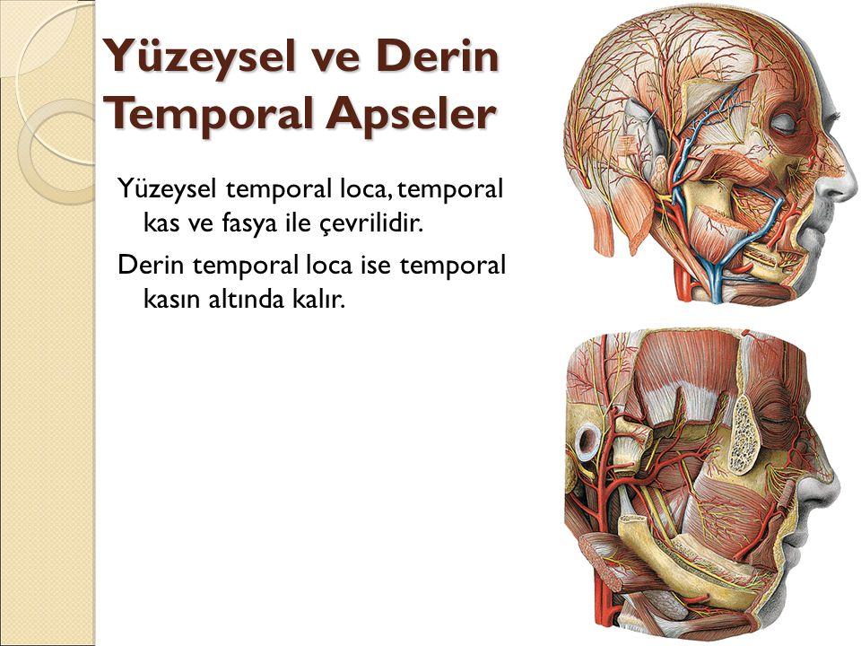Yüzeysel ve Derin Temporal Apseler Yüzeysel temporal loca, temporal kas ve fasya ile çevrilidir.