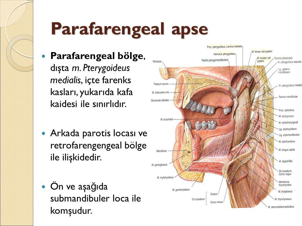 Parafarengeal apse Parafarengeal bölge, dışta m. Pterygoideus medialis, içte farenks kasları, yukarıda kafa kaidesi ile sınırlıdır. Arkada parotis loc