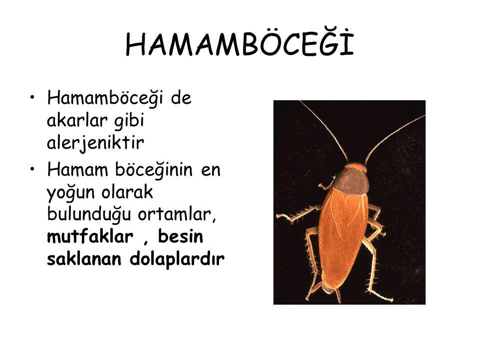 HAMAMBÖCEĞİ Hamamböceği de akarlar gibi alerjeniktir Hamam böceğinin en yoğun olarak bulunduğu ortamlar, mutfaklar, besin saklanan dolaplardır