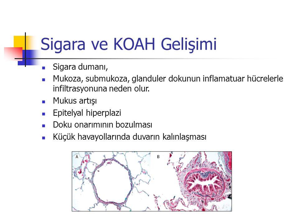 Sigara ve KOAH Gelişimi Sigara dumanı, Mukoza, submukoza, glanduler dokunun inflamatuar hücrelerle infiltrasyonuna neden olur. Mukus artışı Epitelyal
