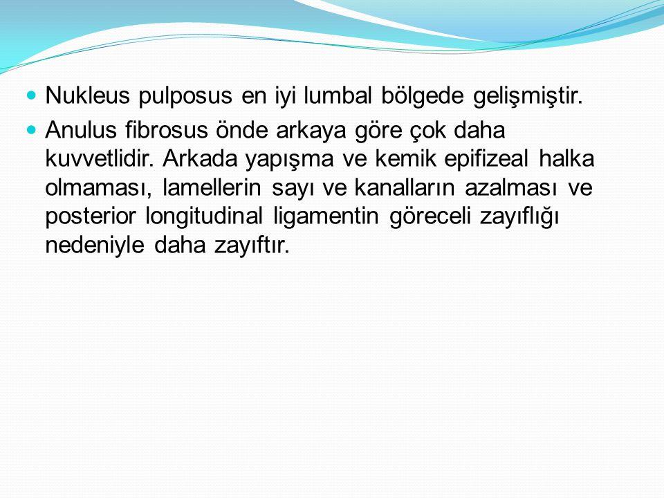 Nukleus pulposus en iyi lumbal bölgede gelişmiştir. Anulus fibrosus önde arkaya göre çok daha kuvvetlidir. Arkada yapışma ve kemik epifizeal halka olm