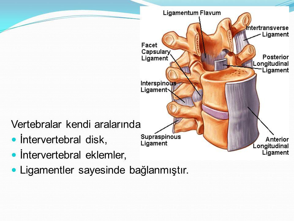 Vertebralar kendi aralarında İntervertebral disk, İntervertebral eklemler, Ligamentler sayesinde bağlanmıştır.