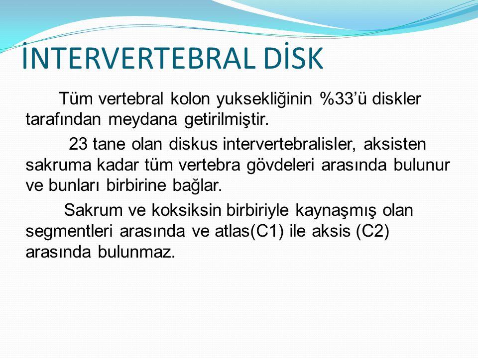İNTERVERTEBRAL DİSK Tüm vertebral kolon yuksekliğinin %33'ü diskler tarafından meydana getirilmiştir. 23 tane olan diskus intervertebralisler, aksiste