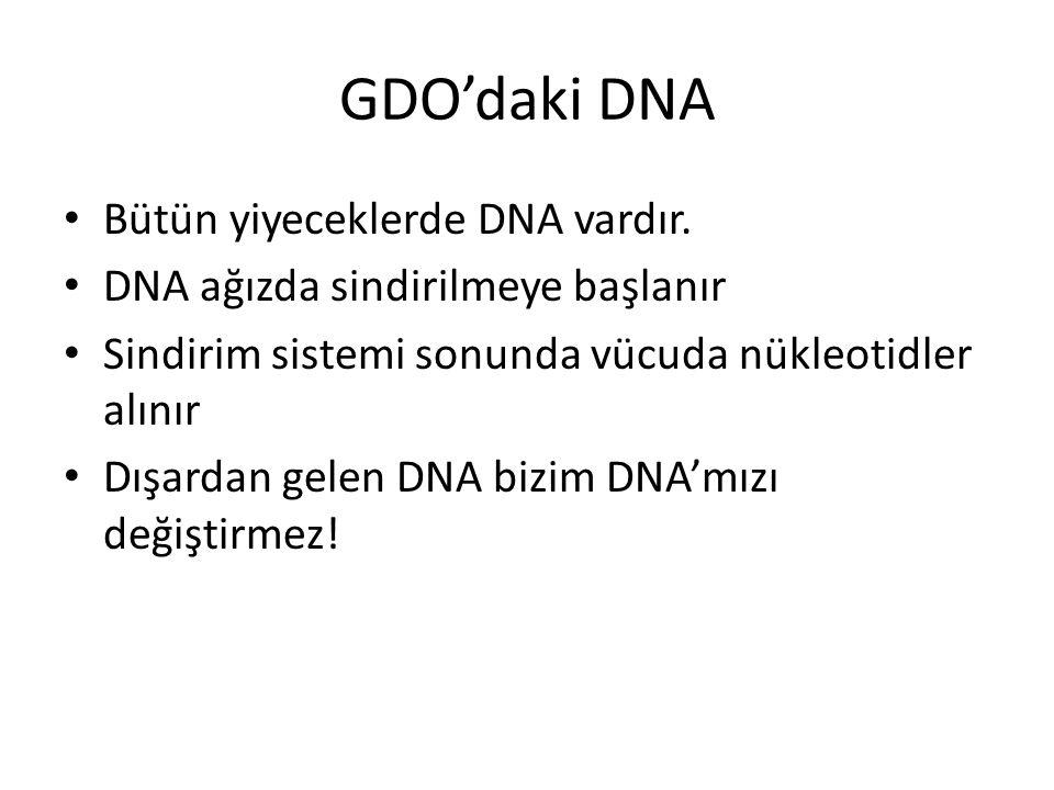 GDO'daki DNA Bütün yiyeceklerde DNA vardır. DNA ağızda sindirilmeye başlanır Sindirim sistemi sonunda vücuda nükleotidler alınır Dışardan gelen DNA bi