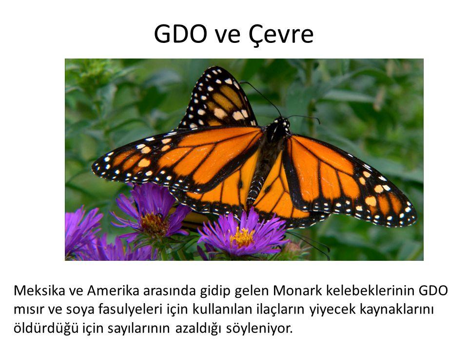 GDO ve Çevre Meksika ve Amerika arasında gidip gelen Monark kelebeklerinin GDO mısır ve soya fasulyeleri için kullanılan ilaçların yiyecek kaynakların