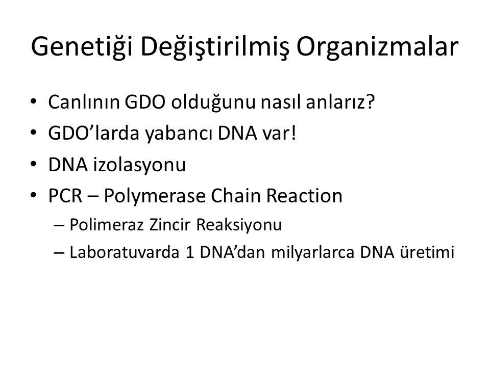 Genetiği Değiştirilmiş Organizmalar Canlının GDO olduğunu nasıl anlarız? GDO'larda yabancı DNA var! DNA izolasyonu PCR – Polymerase Chain Reaction – P
