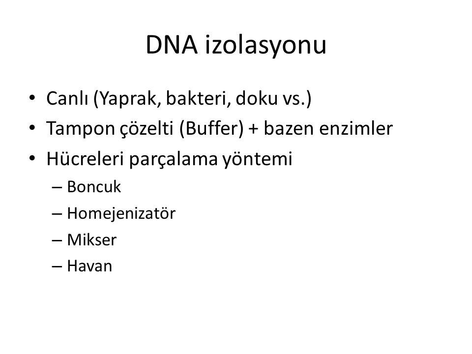 DNA izolasyonu Canlı (Yaprak, bakteri, doku vs.) Tampon çözelti (Buffer) + bazen enzimler Hücreleri parçalama yöntemi – Boncuk – Homejenizatör – Mikse