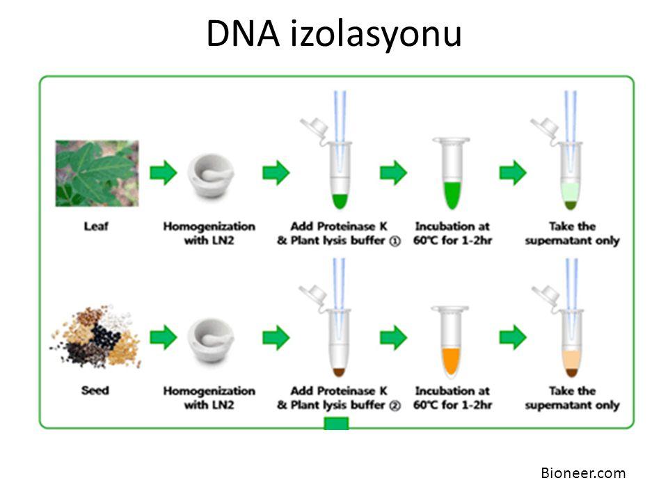 DNA izolasyonu Bioneer.com