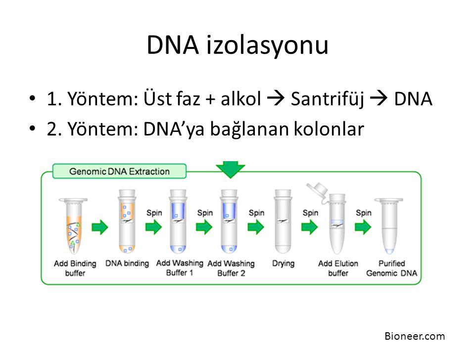 DNA izolasyonu 1. Yöntem: Üst faz + alkol  Santrifüj  DNA 2. Yöntem: DNA'ya bağlanan kolonlar Bioneer.com