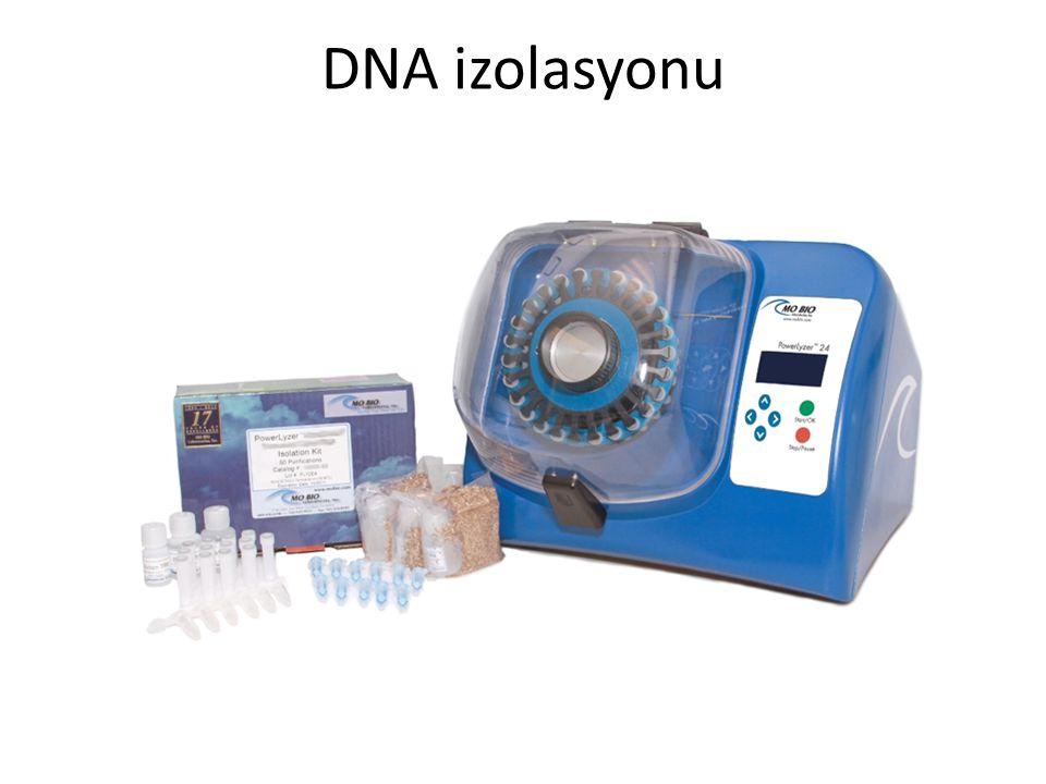 DNA izolasyonu