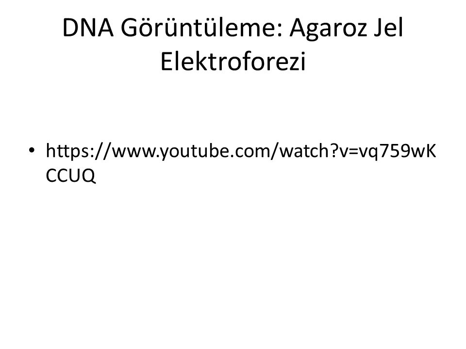 https://www.youtube.com/watch?v=vq759wK CCUQ DNA Görüntüleme: Agaroz Jel Elektroforezi