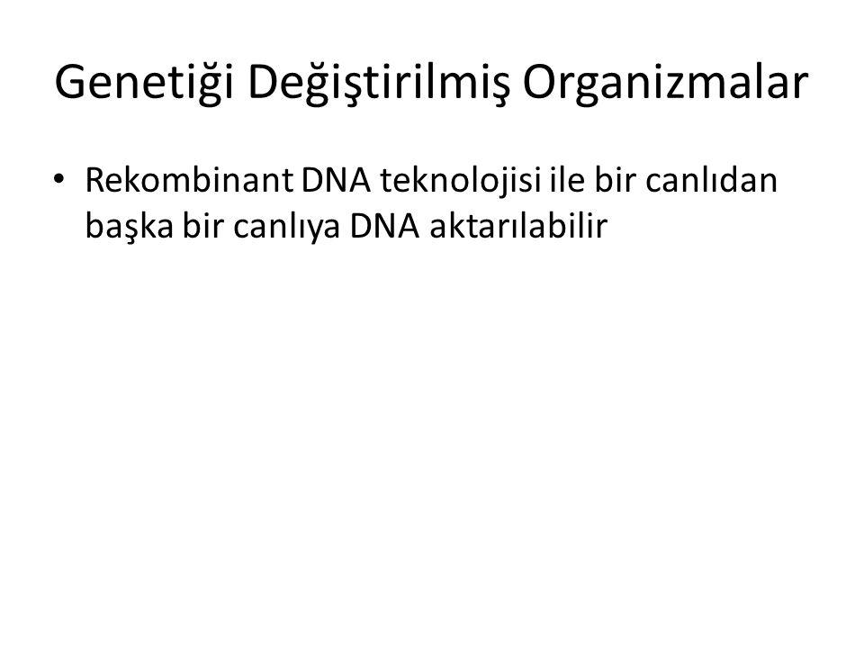 Genetiği Değiştirilmiş Organizmalar Rekombinant DNA teknolojisi ile bir canlıdan başka bir canlıya DNA aktarılabilir