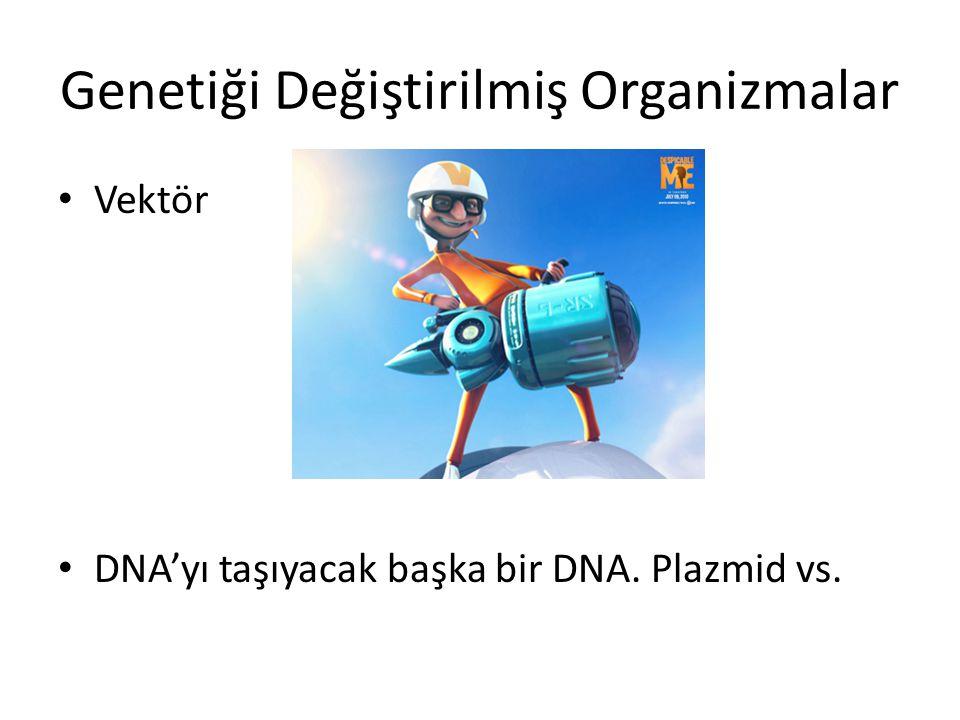 Genetiği Değiştirilmiş Organizmalar Vektör DNA'yı taşıyacak başka bir DNA. Plazmid vs.