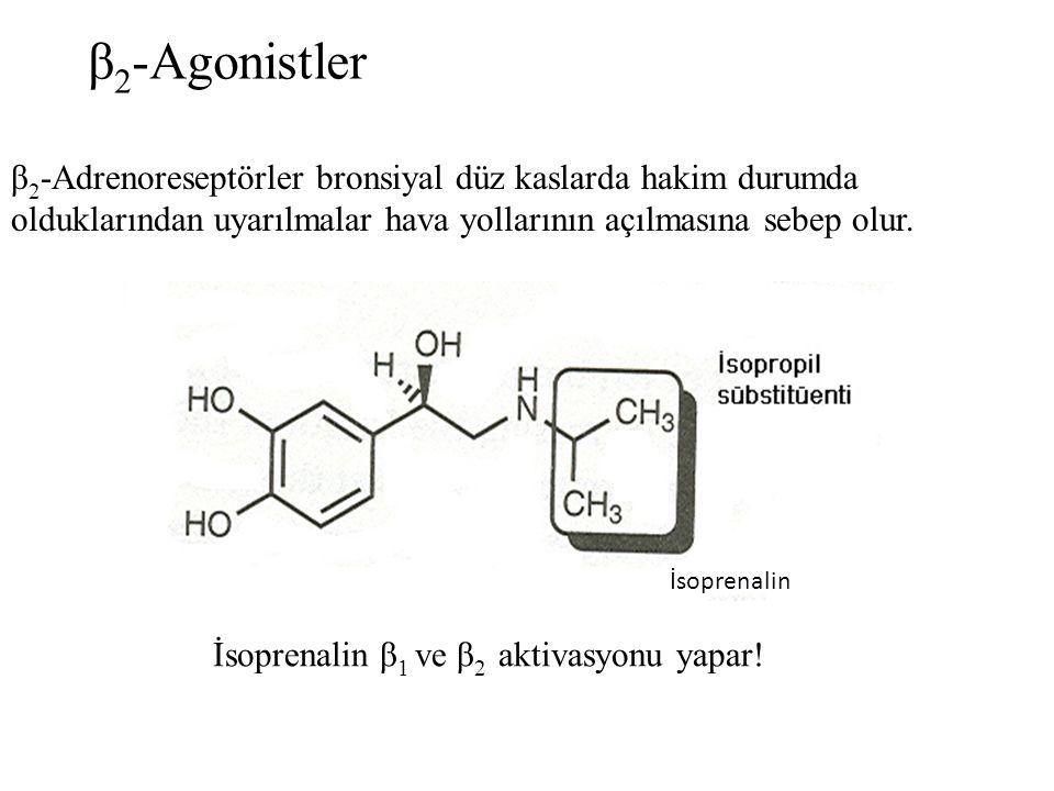 β 2 -Agonistler β 2 -Adrenoreseptörler bronsiyal düz kaslarda hakim durumda olduklarından uyarılmalar hava yollarının açılmasına sebep olur. İsoprenal