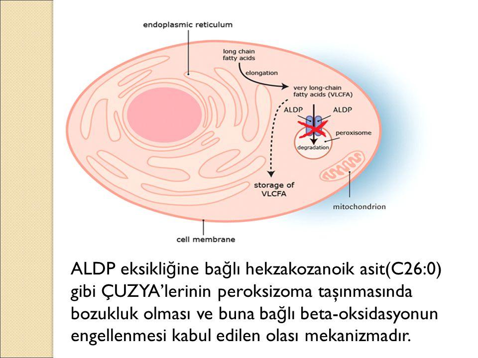 ALDP eksikli ğ ine ba ğ lı hekzakozanoik asit(C26:0) gibi ÇUZYA'lerinin peroksizoma taşınmasında bozukluk olması ve buna ba ğ lı beta-oksidasyonun engellenmesi kabul edilen olası mekanizmadır.