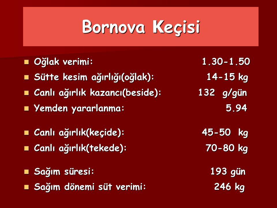 Bornova K eçisi Oğlak verimi: 1.30-1.50 Oğlak verimi: 1.30-1.50 Sütte kesim ağırlığı(oğlak): 14-15 kg Sütte kesim ağırlığı(oğlak): 14-15 kg Canlı ağır