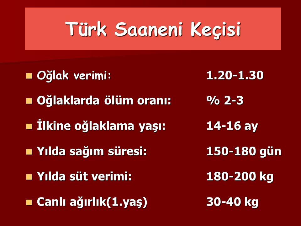 Türk Saaneni Keçisi Oğlak verimi: 1.20-1.30 Oğlak verimi: 1.20-1.30 Oğlaklarda ölüm oranı:% 2-3 Oğlaklarda ölüm oranı:% 2-3 İlkine oğlaklama yaşı:14-1