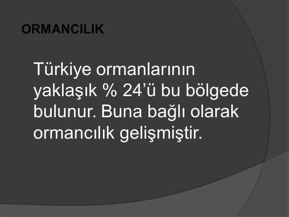 ORMANCILIK Türkiye ormanlarının yaklaşık % 24'ü bu bölgede bulunur.
