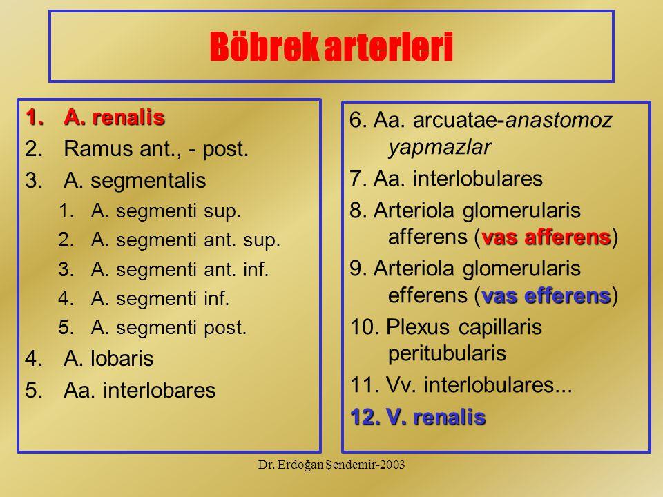 Dr. Erdoğan Şendemir-2003 Böbrek arterleri 1.A. renalis 2.Ramus ant., - post. 3.A. segmentalis 1.A. segmenti sup. 2.A. segmenti ant. sup. 3.A. segment