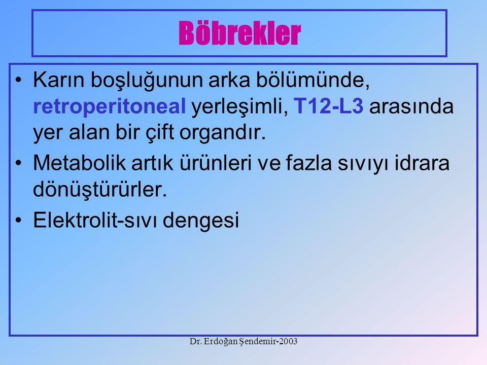 Dr. Erdoğan Şendemir-2003 Böbrekler Karın boşluğunun arka bölümünde, retroperitoneal yerleşimli, T12-L3 arasında yer alan bir çift organdır. Metabolik