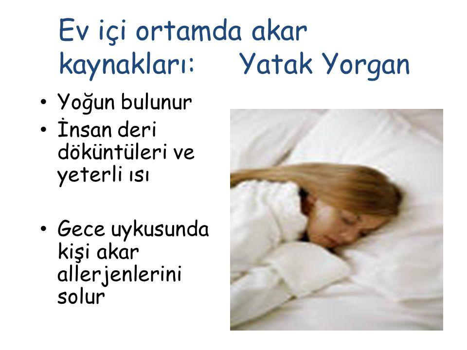 Yoğun bulunur İnsan deri döküntüleri ve yeterli ısı Gece uykusunda kişi akar allerjenlerini solur Ev içi ortamda akar kaynakları: Yatak Yorgan