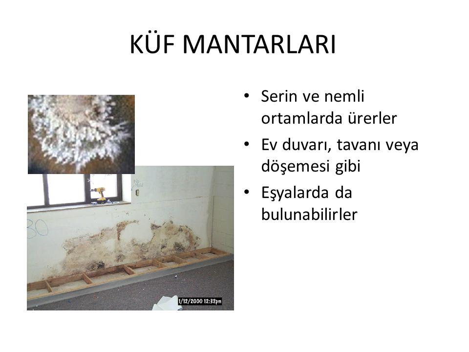 KÜF MANTARLARI Serin ve nemli ortamlarda ürerler Ev duvarı, tavanı veya döşemesi gibi Eşyalarda da bulunabilirler